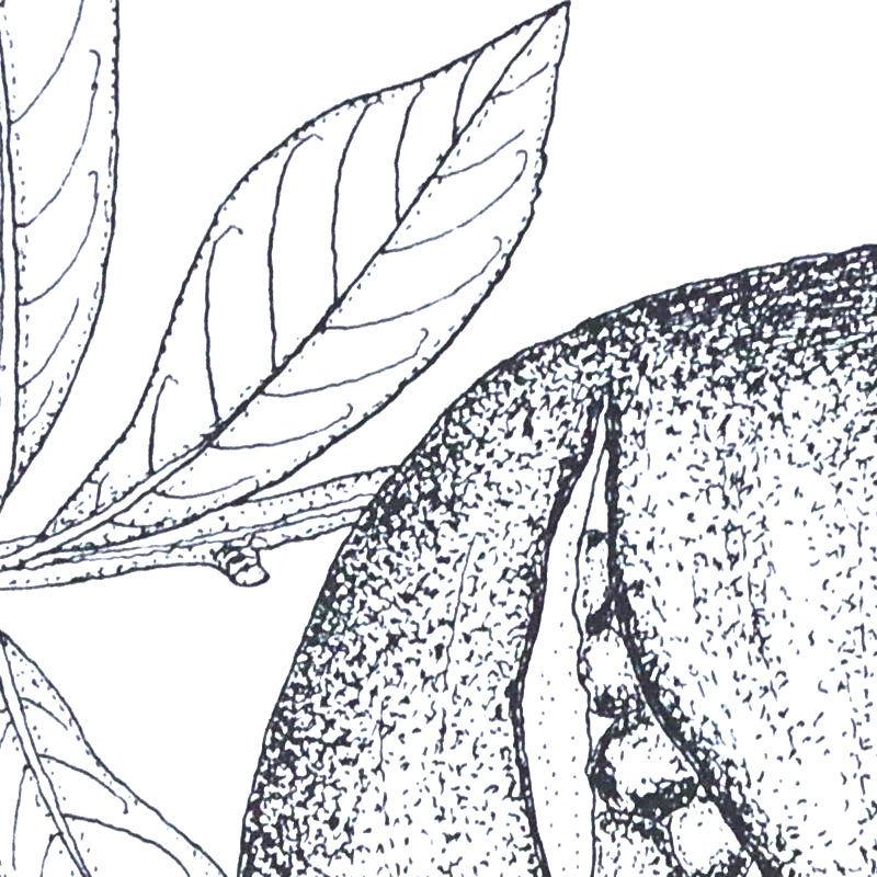 花材「ざくろ」の部分拡大図