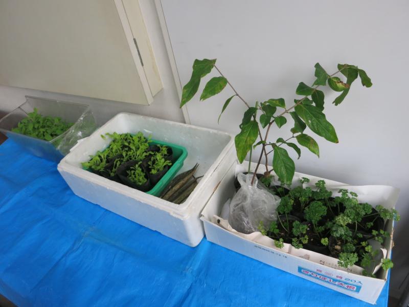植物や野菜の苗がい~っぱい!みんなにプレゼント♪