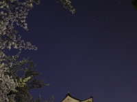 小田原城天守閣と夜桜