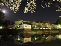 城址公園の夜桜
