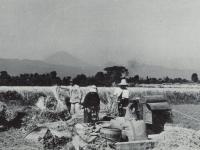 鴨宮付近での脱穀作業