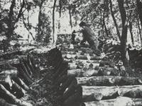 石橋地区のしいたけの原木積み