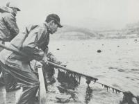 根府川沖のワカメ養殖