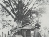 かやの木と子育て地蔵
