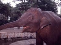 象のウメ子