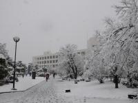 小田原市役所雪景色