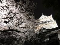 天守閣と夜桜