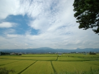 栢山の田園風景