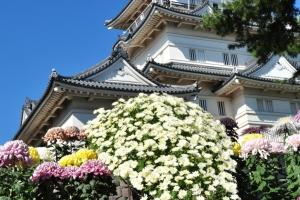 城址公園の菊(菊花展)