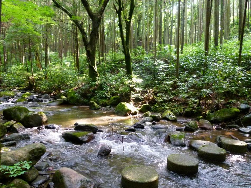 いこいの森を流れる清流