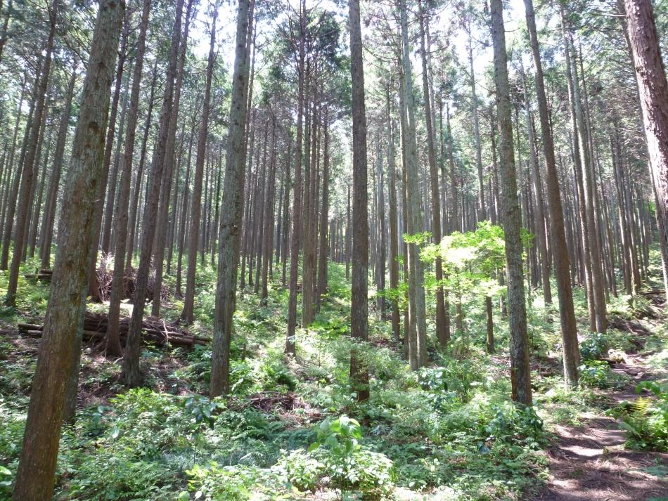 小田原の森林