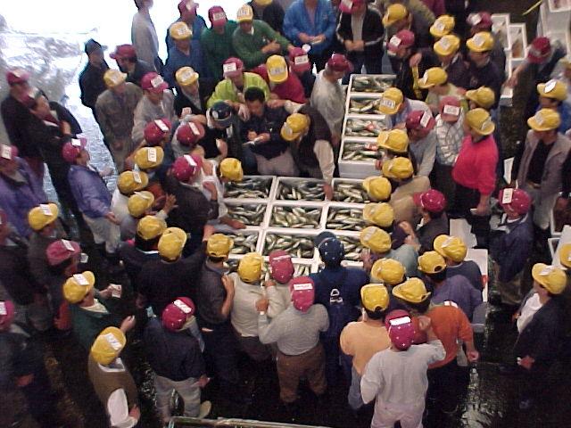 魚市場写真2