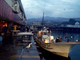 魚市場写真1