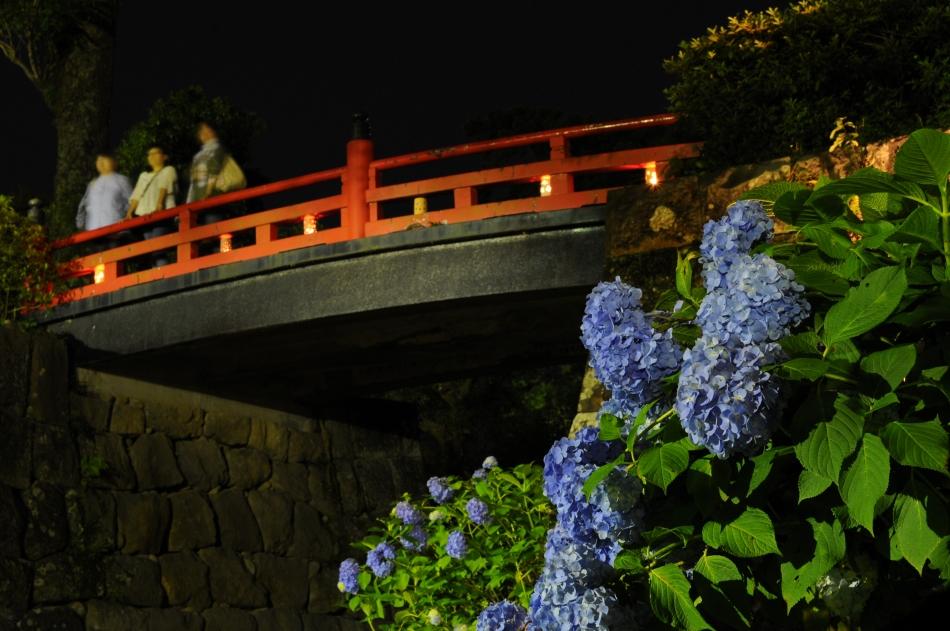 常盤木橋とあじさい(AKARI NIGHT)
