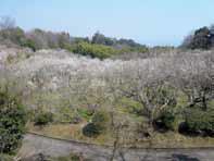 Jardín Botánico de Tsujimura