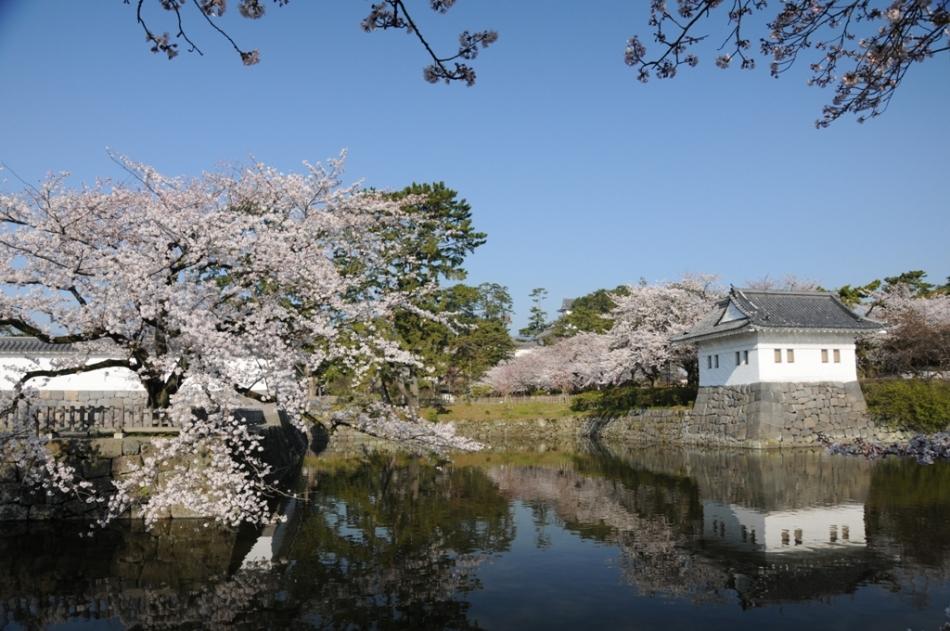 스미야구라(모서리 망루)와 벚꽃