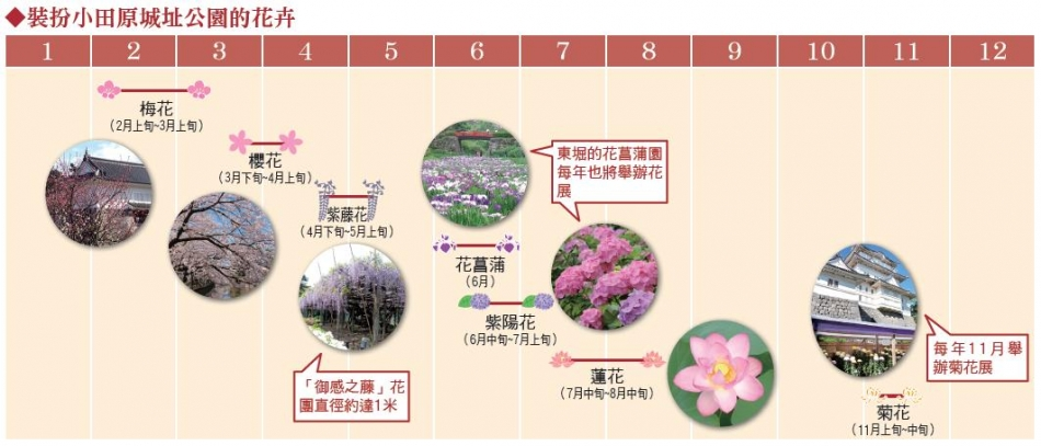 裝扮小田原城址公園的花卉