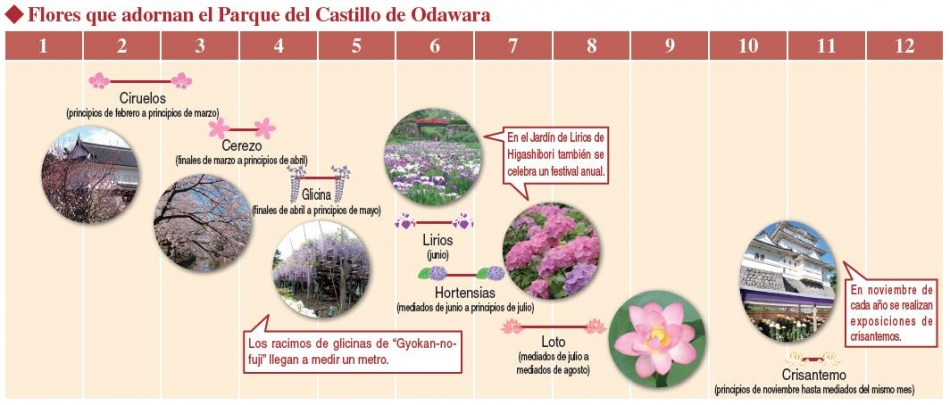 Flores que adornan el Parque del Castillo de Odawara