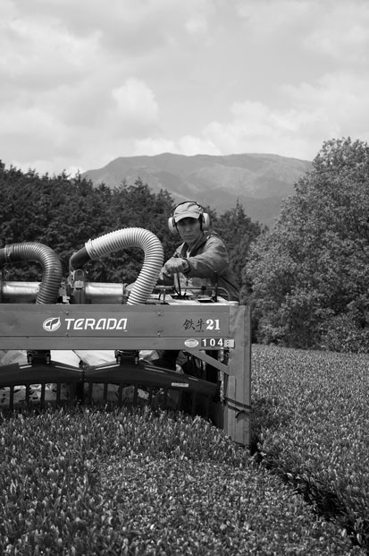 乗用型摘採機で新茶を刈り取る田中さん。
