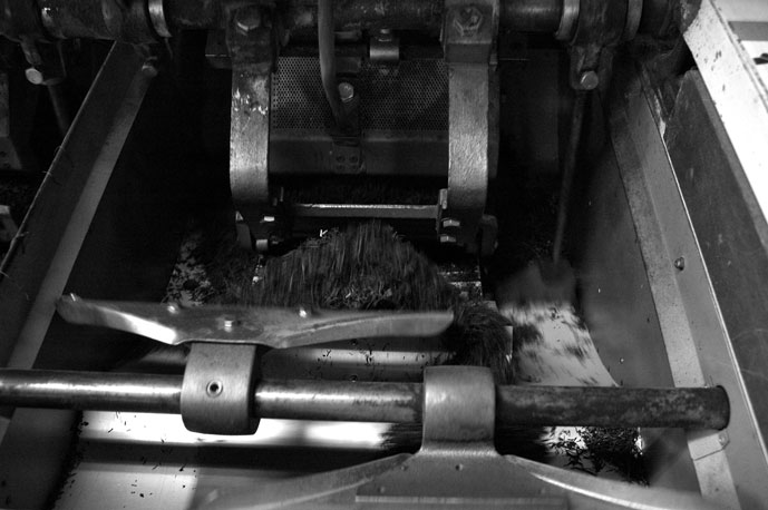 蒸されたお茶っ葉は粗揉機(そじゅうき)—揉捻機(じゅうねんき)—中揉機(ちゅうじゅうき)と運ばれ精揉機(せいじゅうき)で熱と力を加え揉まれる。