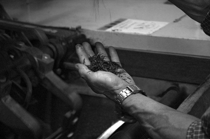 製茶作業では五感を使う。