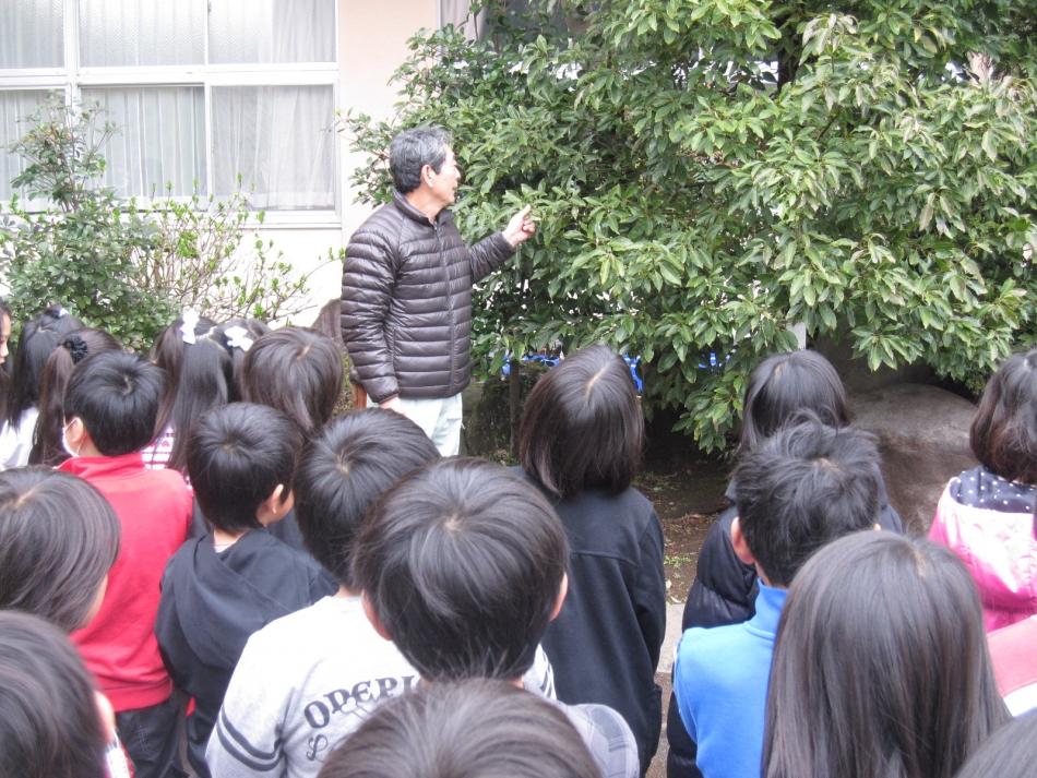 樹木観察2