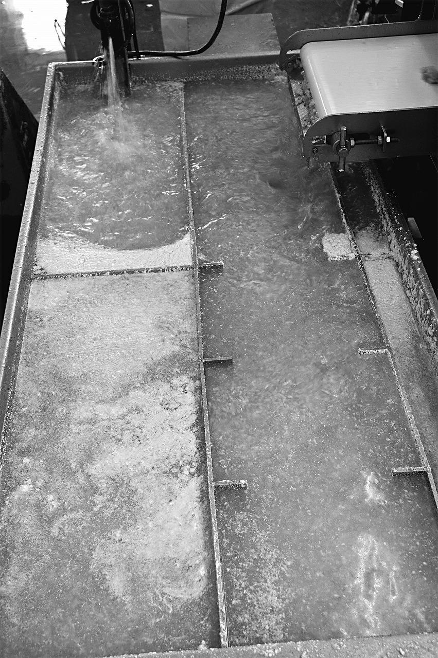 魚の身を水にさらし、魚の脂や血合いを取り除く様子