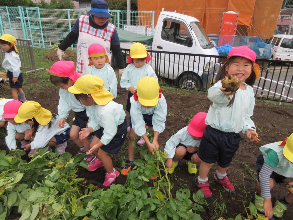 ジャガイモ収穫い