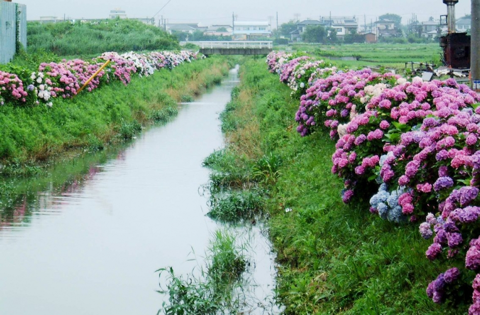 関口川写真