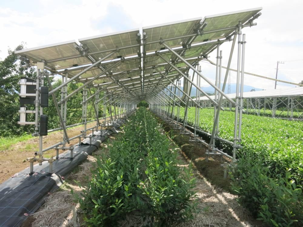 お茶畑に設置された太陽光発電設備