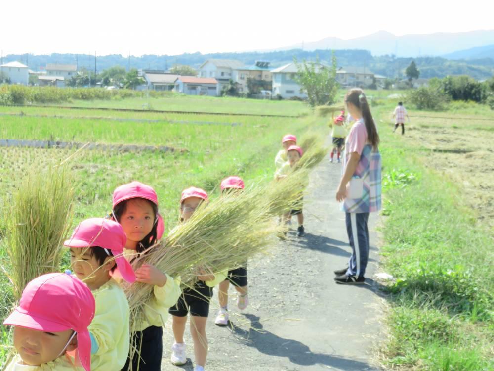 いただいた藁をみんなで運びました。