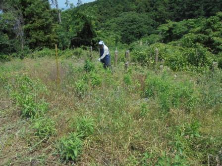 草刈り前の畑