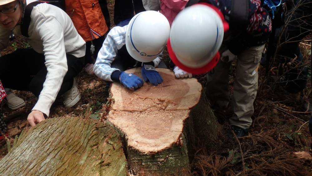 伐採見学の様子
