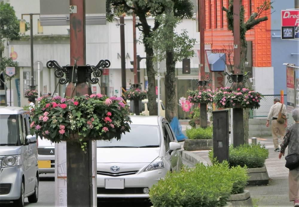 幸田口通りの花灯かり