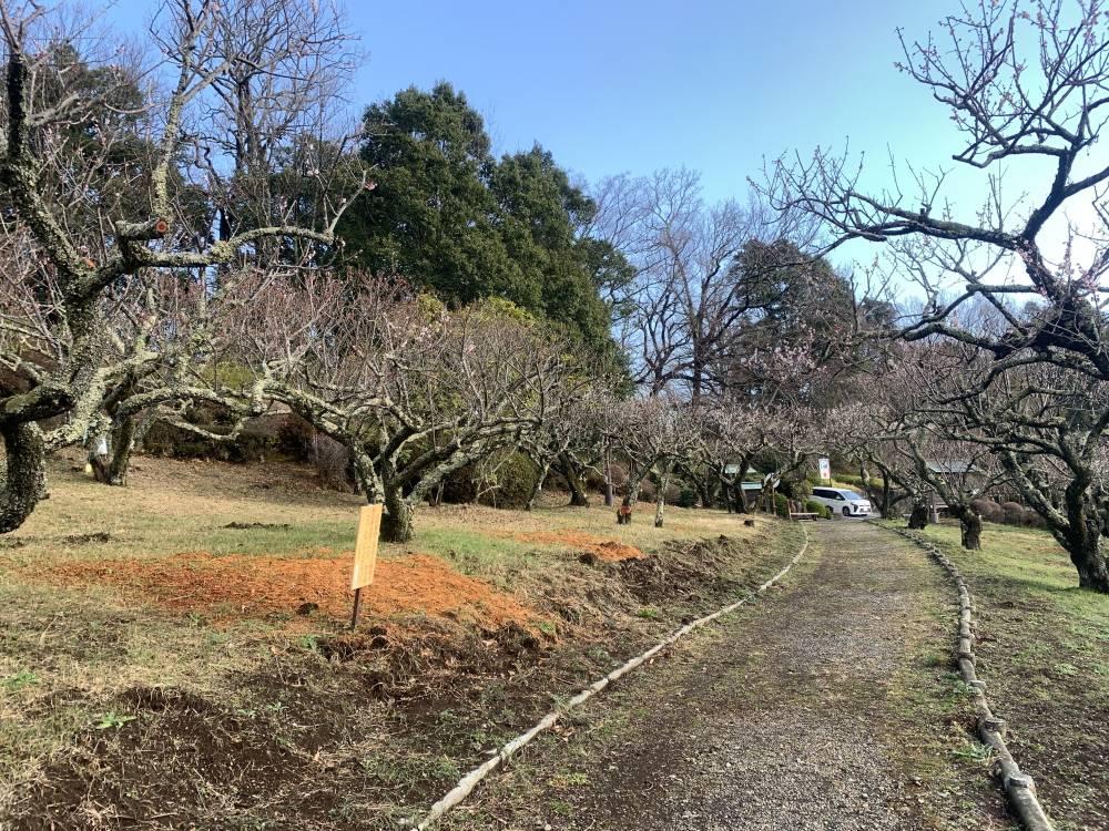 辻村植物公園1
