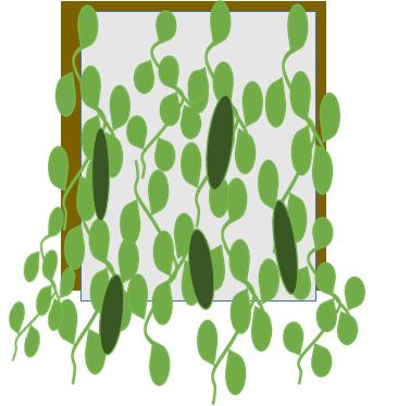 グリーンカーテン