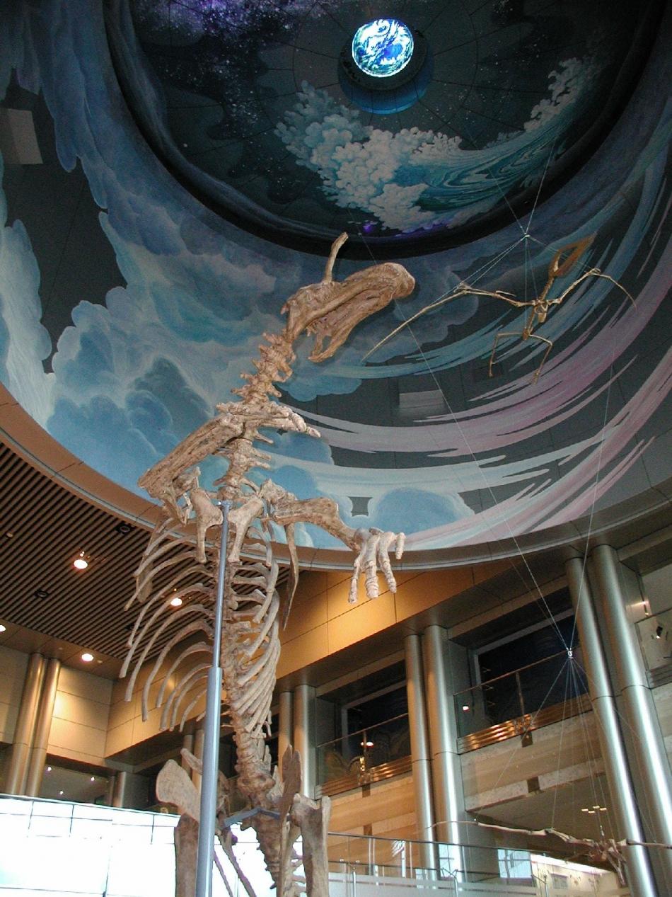 神奈川県立生命の星・地球博物館2