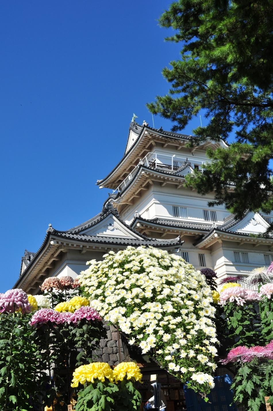 城址公園の菊