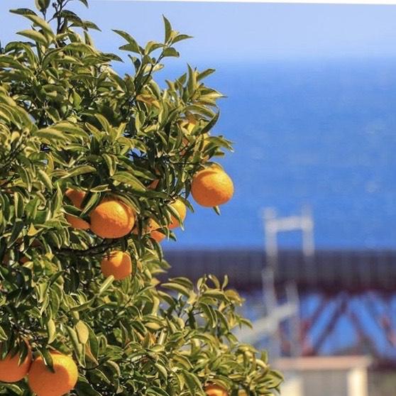 オレンジと海