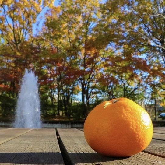オレンジと噴水