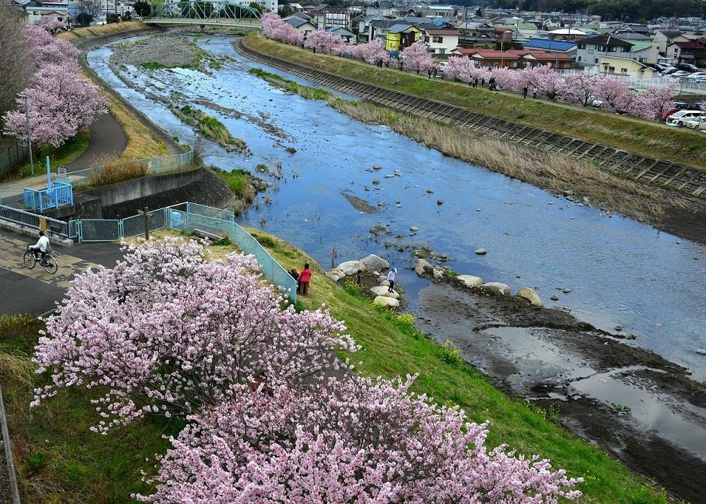 『春の狩川』〔撮影地〕幸せ道(南足柄市)〔撮影者〕青木 房雄