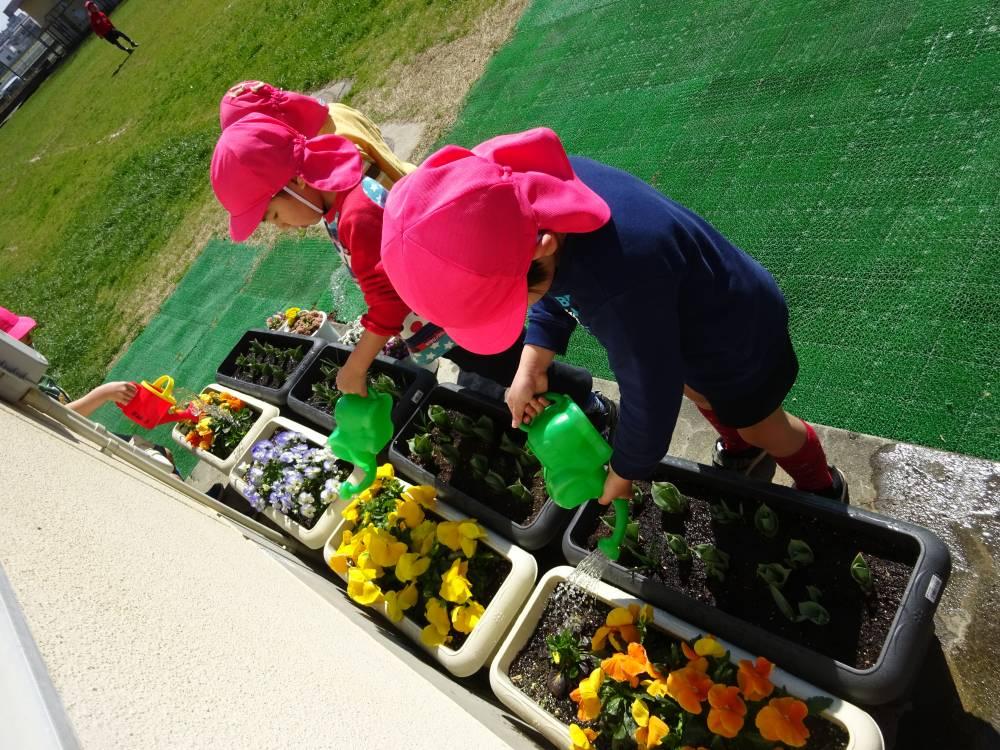 花育事業での園児による花の手入れ風景