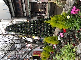 北條ポケットパークの花壇