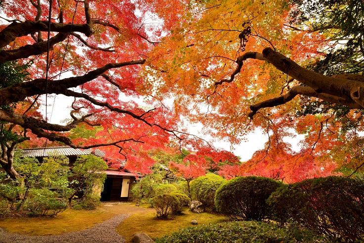 秋の皆春荘