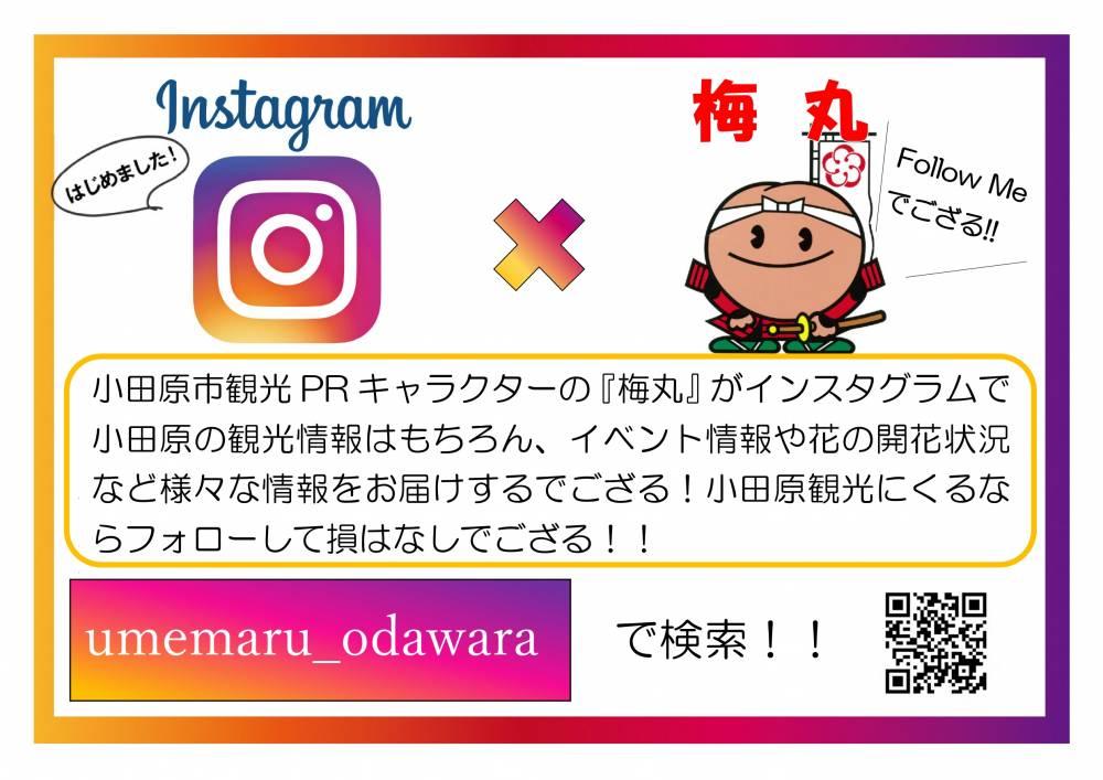 梅丸Instagram