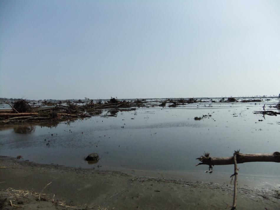 程田地区 海水に浸かった田園