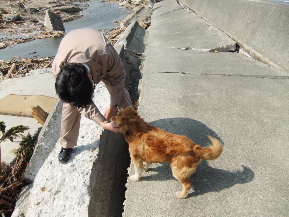 烏崎地区 人懐こい犬