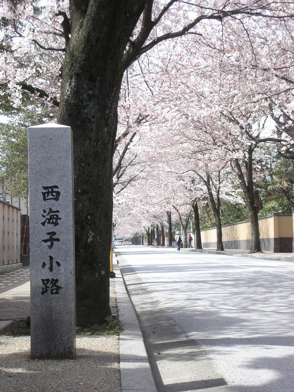 西海子小路の桜並木