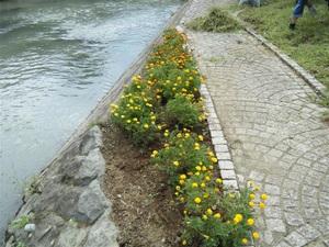 9月 花植え会